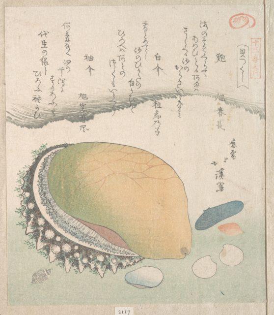 Awabi (Ear-Shell) and Various Shells