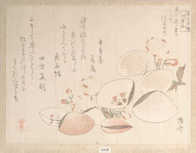 Cherry Blossoms and Shells