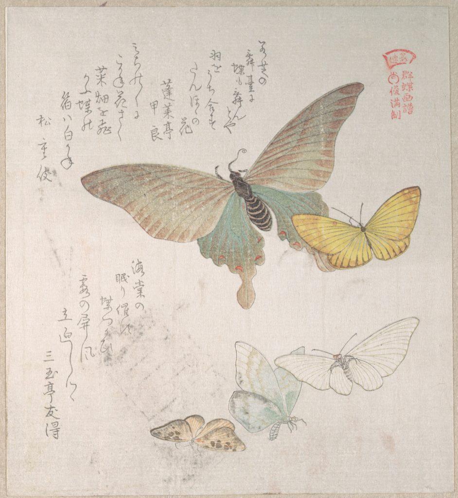 Various Moths and Butterflies
