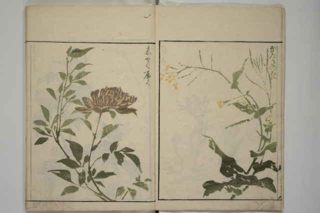 How to Draw Plants and Flowers Simply (Sōka ryakugashiki)