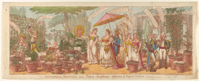 Imperial Botany – or a Peep at Josephine's Collection of Engilsh Exoticks, vide the Champion Jany 30, 1814