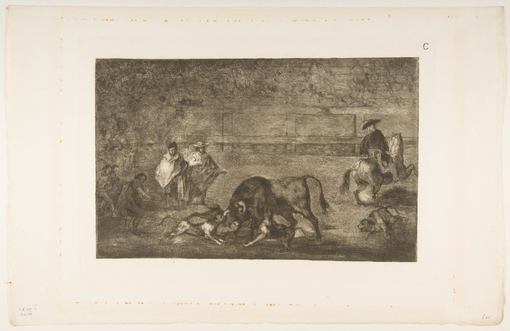 Plate C: The dogs let loose on the bull.