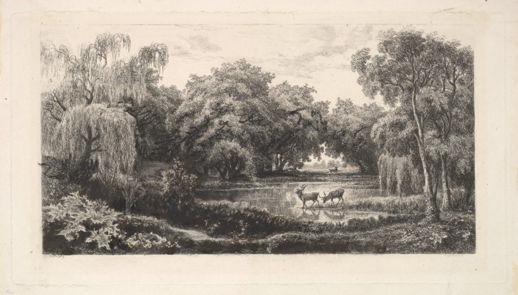 The Deer Pond