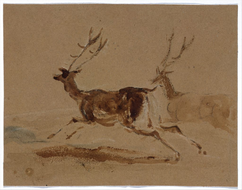 Two Stags Running