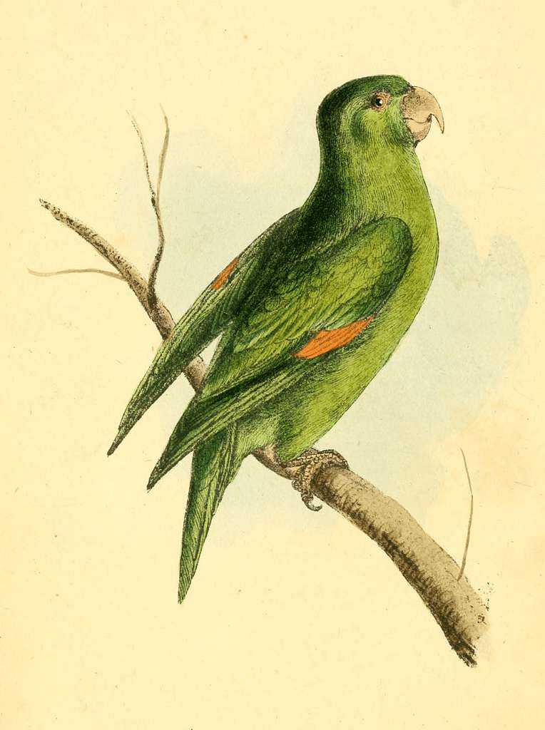 Zoological Illustrations Volume I Plate 1