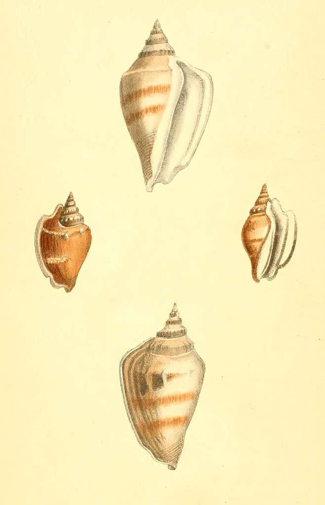 Zoological Illustrations Volume I Plate 10