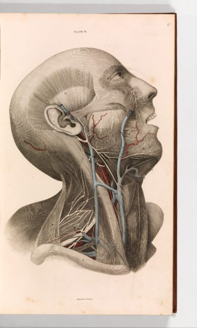 A System of Anatomical Plates of the Human Body, vol. 2