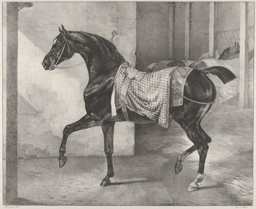 Black Horse Tethered in a Stable