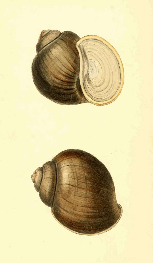 Zoological Illustrations Volume III Plate 120