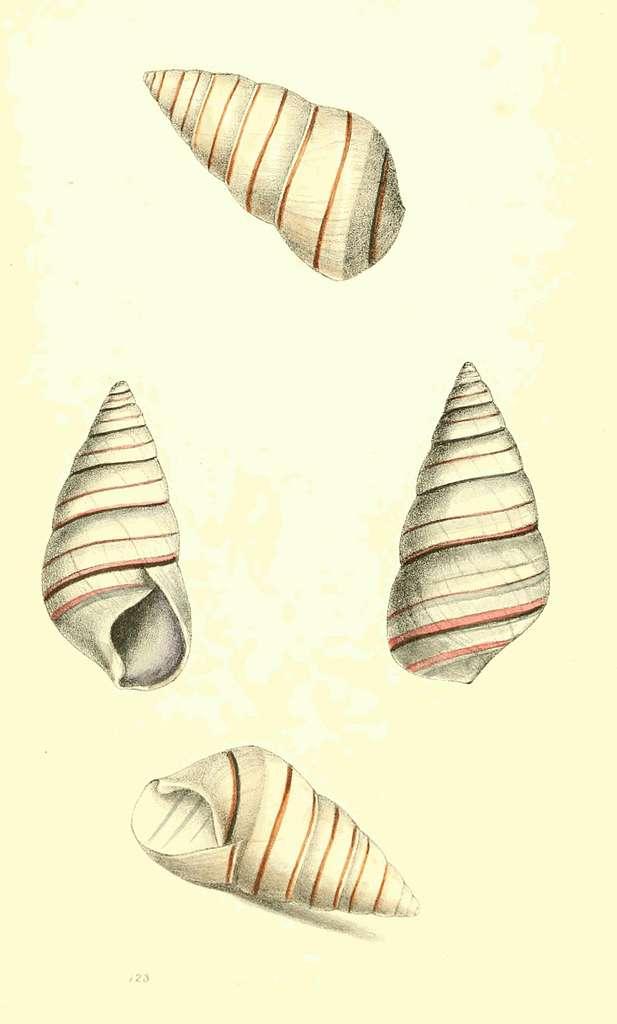 Zoological Illustrations Volume III Plate 123