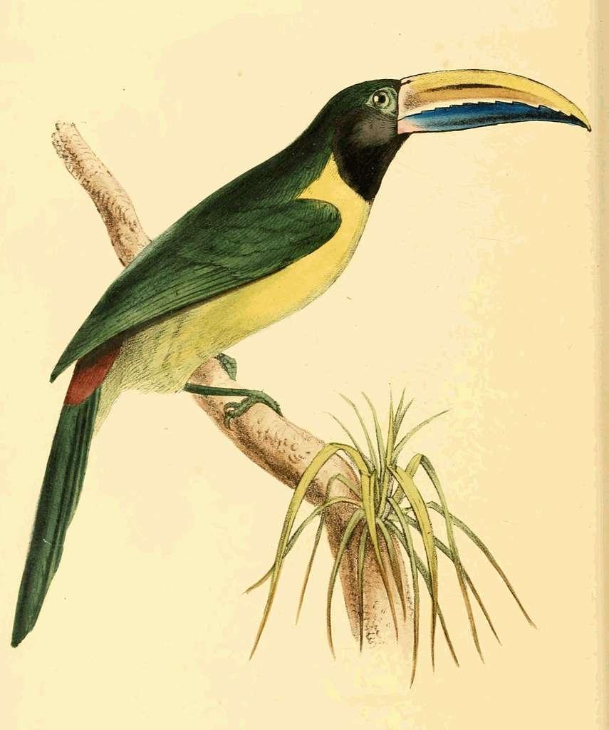 Zoological Illustrations Volume III Plate 169