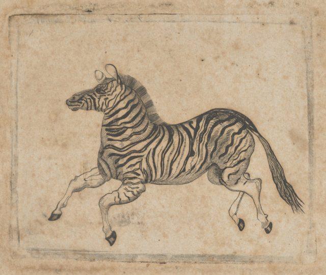 Banknote vignette showing a zebra