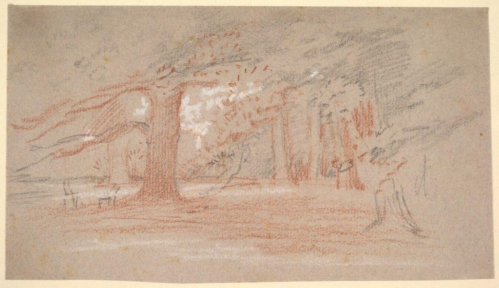 Cedar Trees in a Park