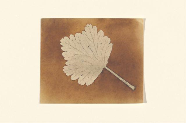 [Leaf]