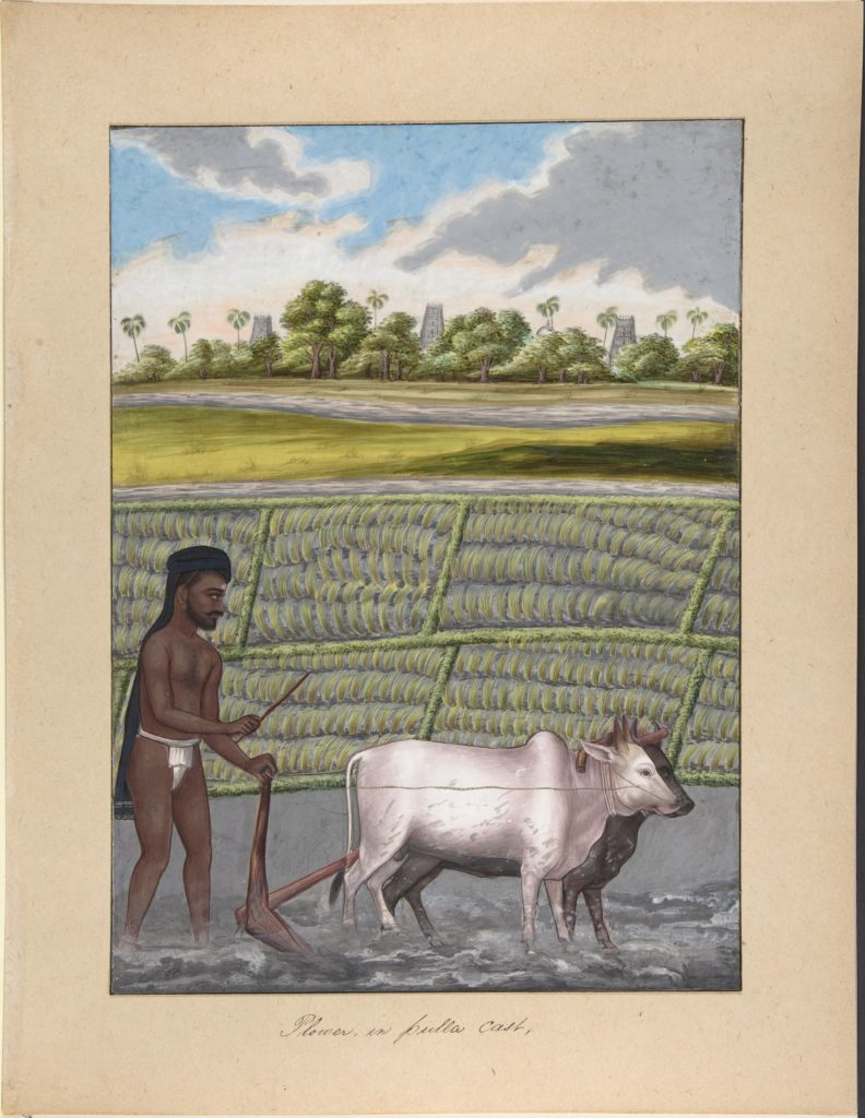 Plower in Pulla Caste, from Indian Trades and Castes