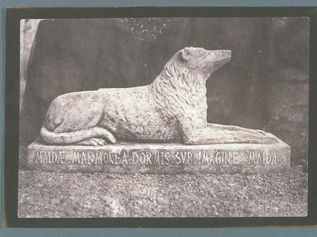 Sir Walter Scott's Favourite Dog, Maida