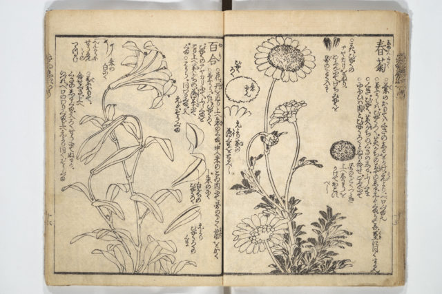 Picture Book on the Use of Coloring, first volume (Ehon saishikitsū shohen)