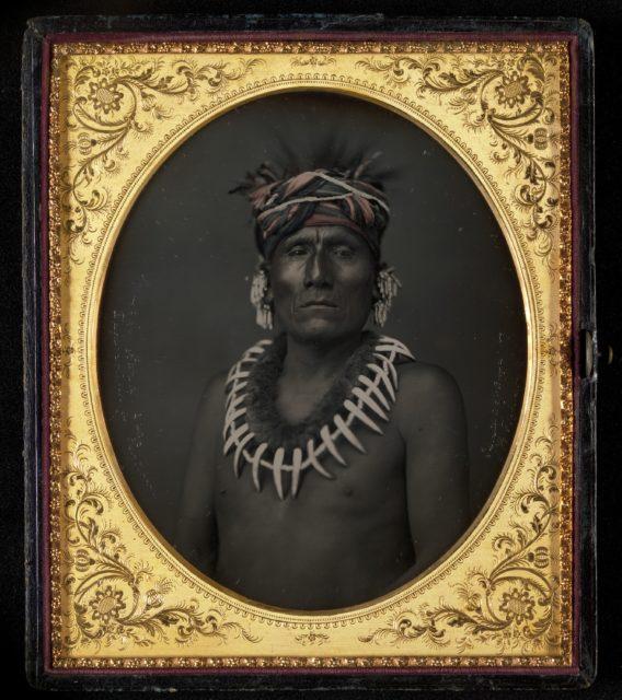 Kno-Shr, Kansas Chief