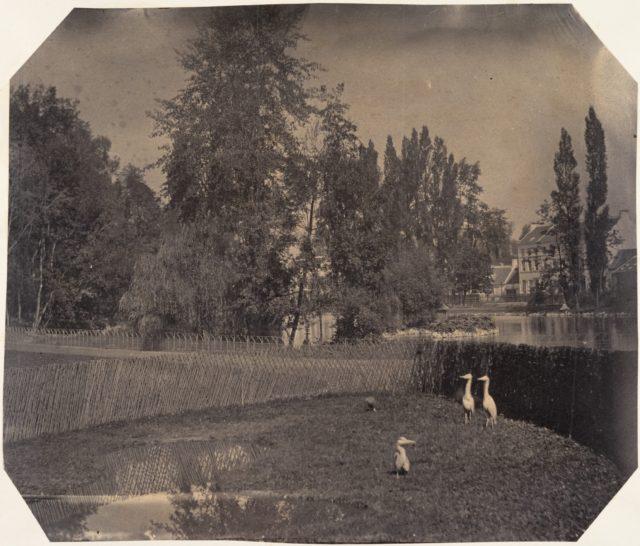 [Heron Pond, Zoological Gardens, Brussels]