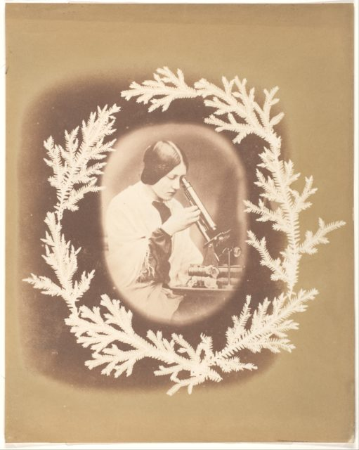 [Thereza Dillwyn Llewelyn with Her Microscope]