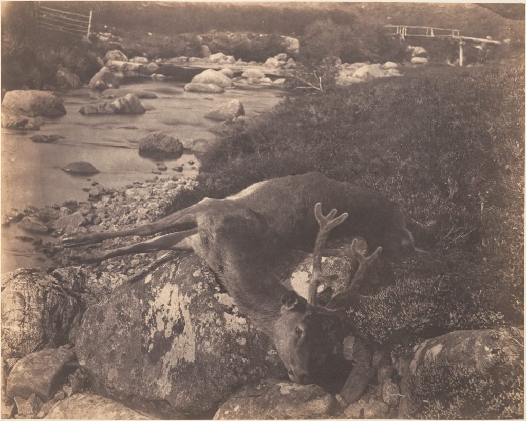[Dead Stag]