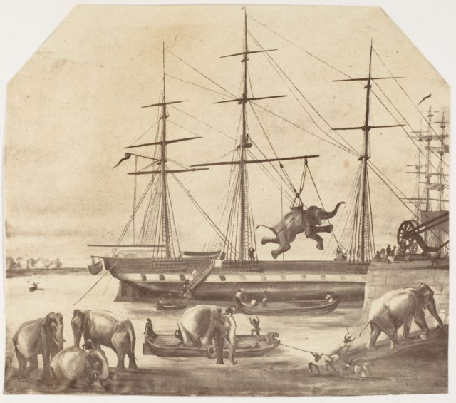 [A Cargo of Seventy Elephants Landing from Burmah during the 1857 Mutiny]