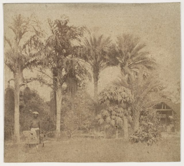 [Gardens, Government House, Allahabad]