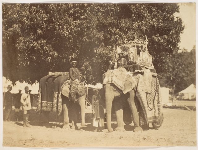 [Governor General's State Elephant and Silver Howdah]
