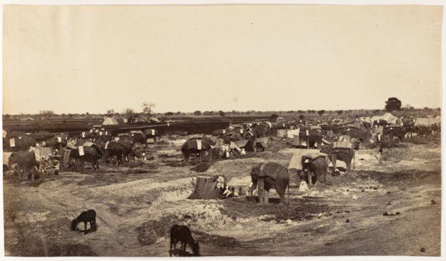 [Hatti Kana-The Elephant Camp]