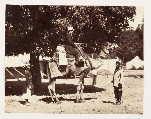 [J.C.S. on a Riding Camel]