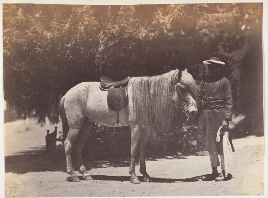 [Lord Canning's Hill Pony]