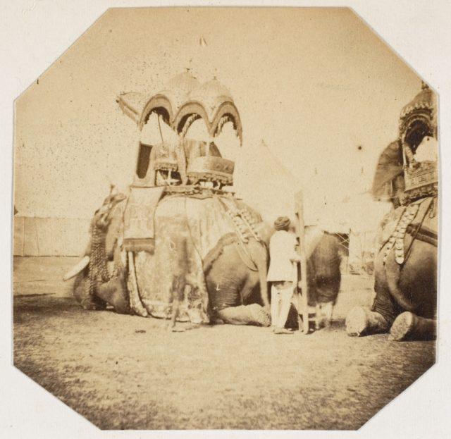[Maharajah Putteala's State Elephant]