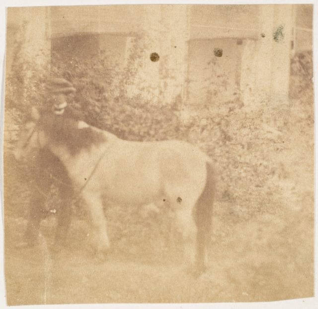[Man and Horse, Government House, Allahabad]