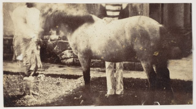 [My Pegu Pony]