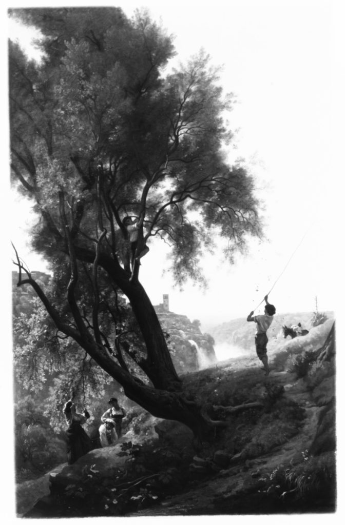 Gathering Olives at Tivoli