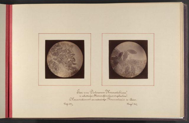 Mikroskopisch-Photographischer Atlas der Harnsedimente