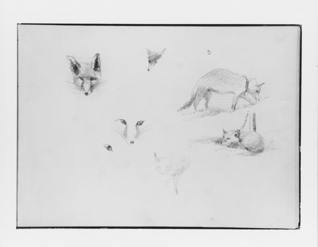 Foxes (from Switzerland 1870 Sketchbook)