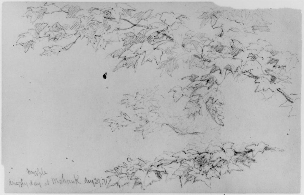 Maple Leaves, 1871 (from Sketchbook)