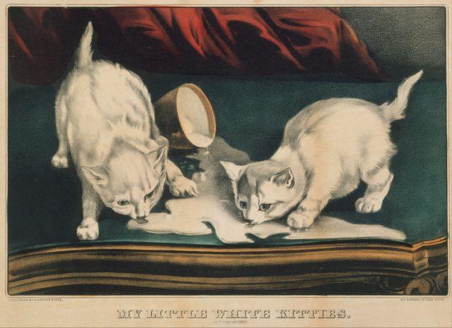 My Little White Kitties – Into Mischief