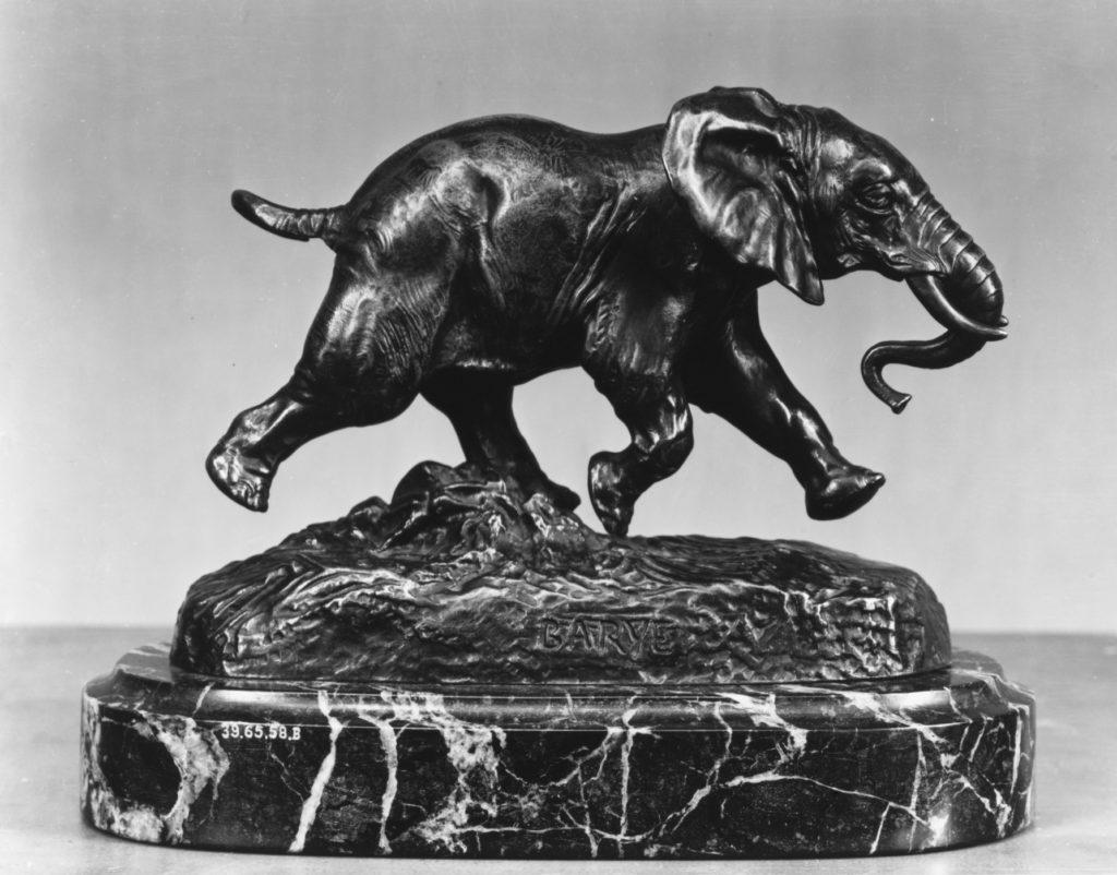Senegalese Elephant