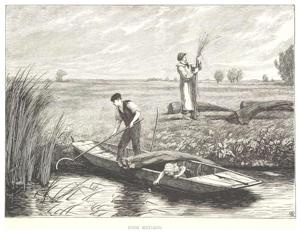 RO(1875) P140 RUSH CUTTING