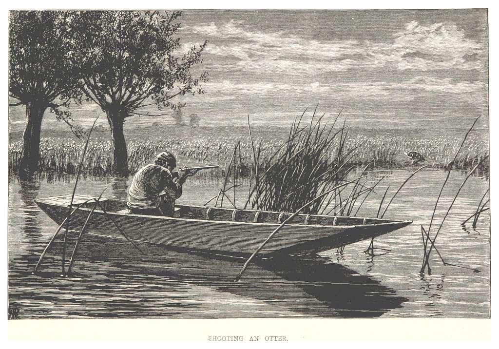 RO(1875) P186 SHOOTING AN OTTER