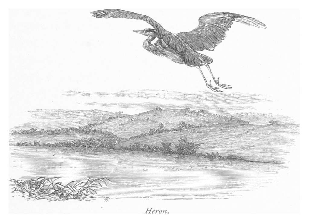 RO(1875) P195 HERON