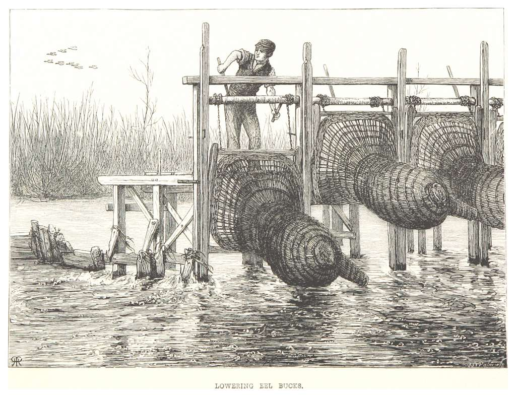 RO(1875) P198 LOWERING EEL BUCKS