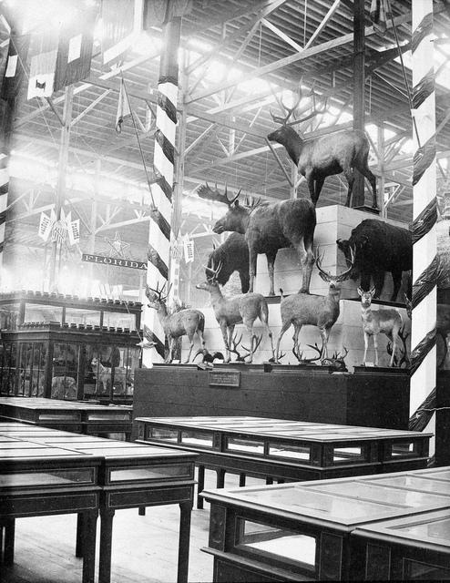 Philadelphia Centennial - Mammal Exhibit