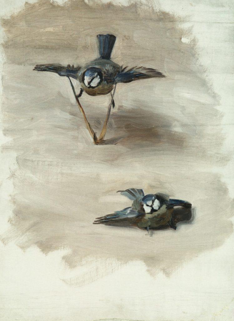 Studies of a Dead Bird