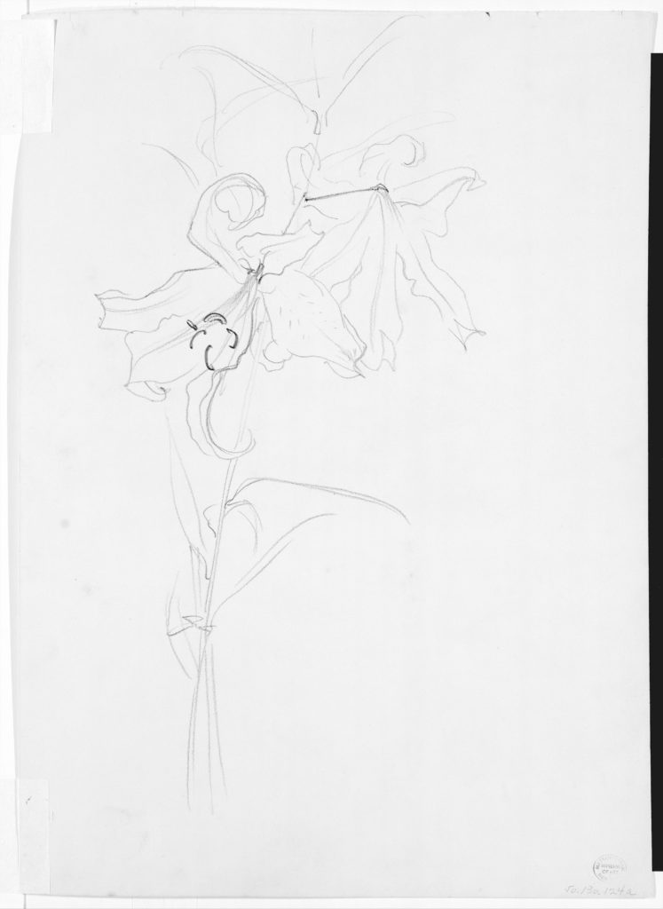 """Lily, Study for """"Carnation, Lily, Lily, Rose"""""""