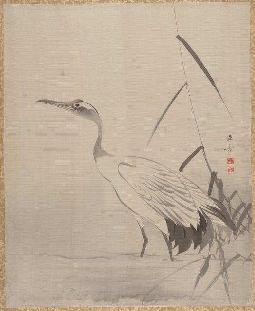Crane Among Reeds