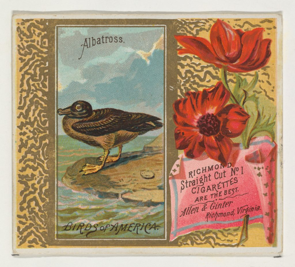Albatross, from the Birds of America series (N37) for Allen & Ginter Cigarettes