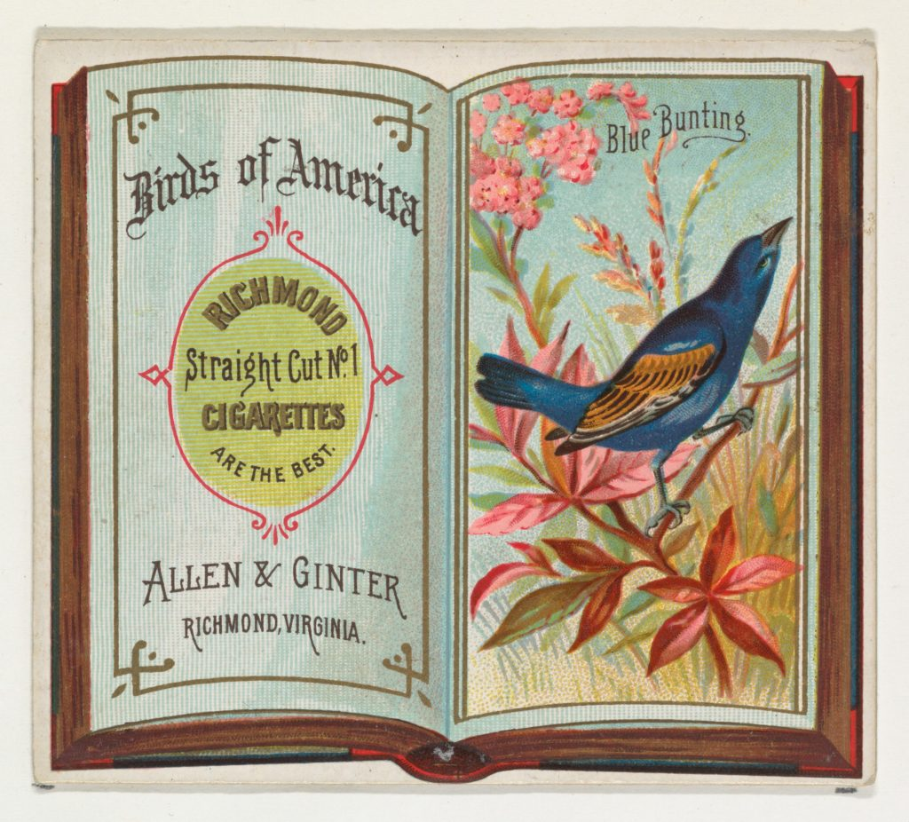 Blue Bunting, from the Birds of America series (N37) for Allen & Ginter Cigarettes
